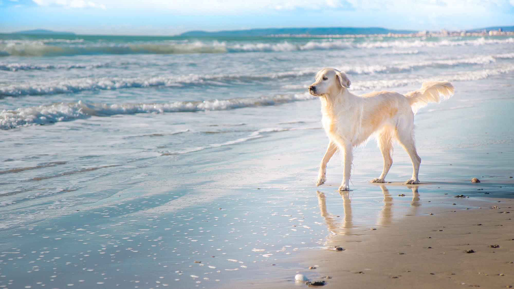 La Grande Motte avec son chien