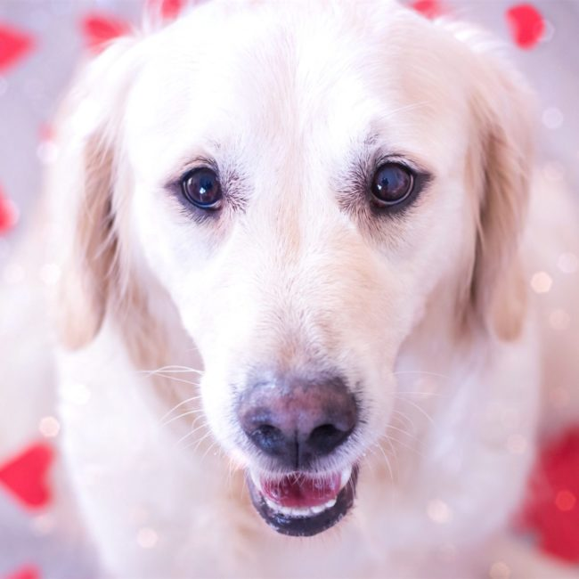 Les 5 fondamentaux pour l'hygiène de son chien