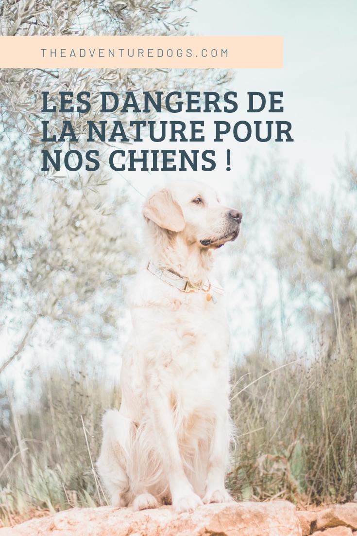 Les dangers de la nature pour nos chiens !