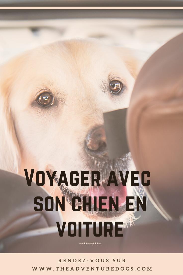 Voyager avec son chien en voiture