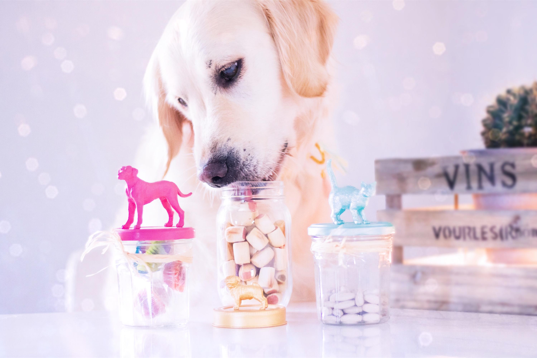 DIY Bocaux à friandises pour chien