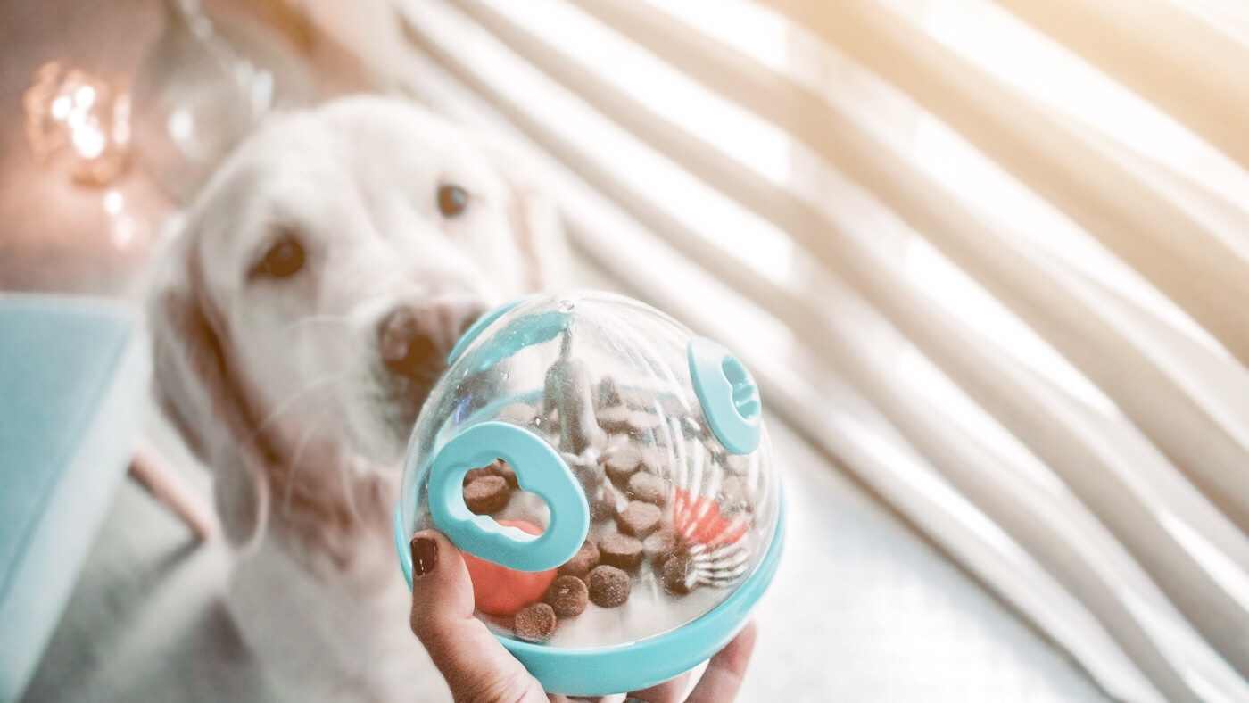 Woobble Ball jouet pour chien