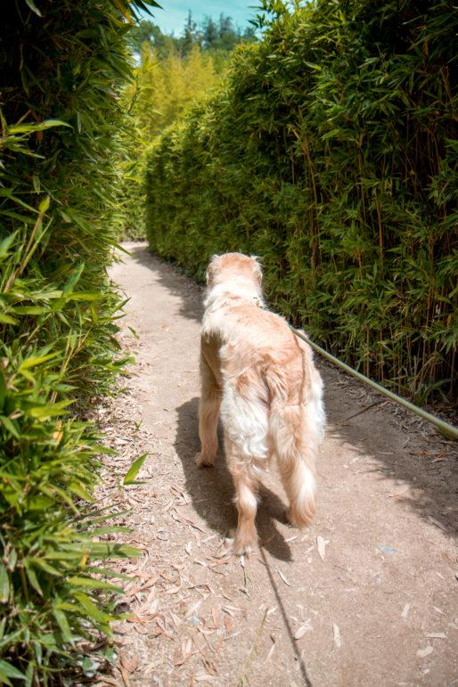La bambouseraie en Cévennes avec son chien