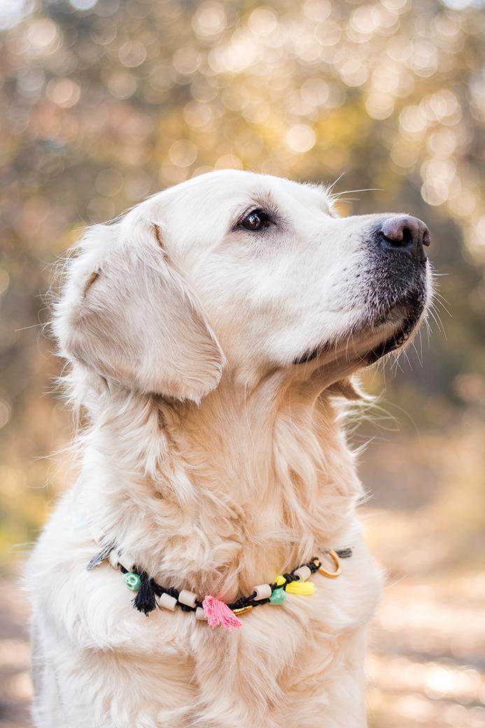 Diy collier pour chien en céramique