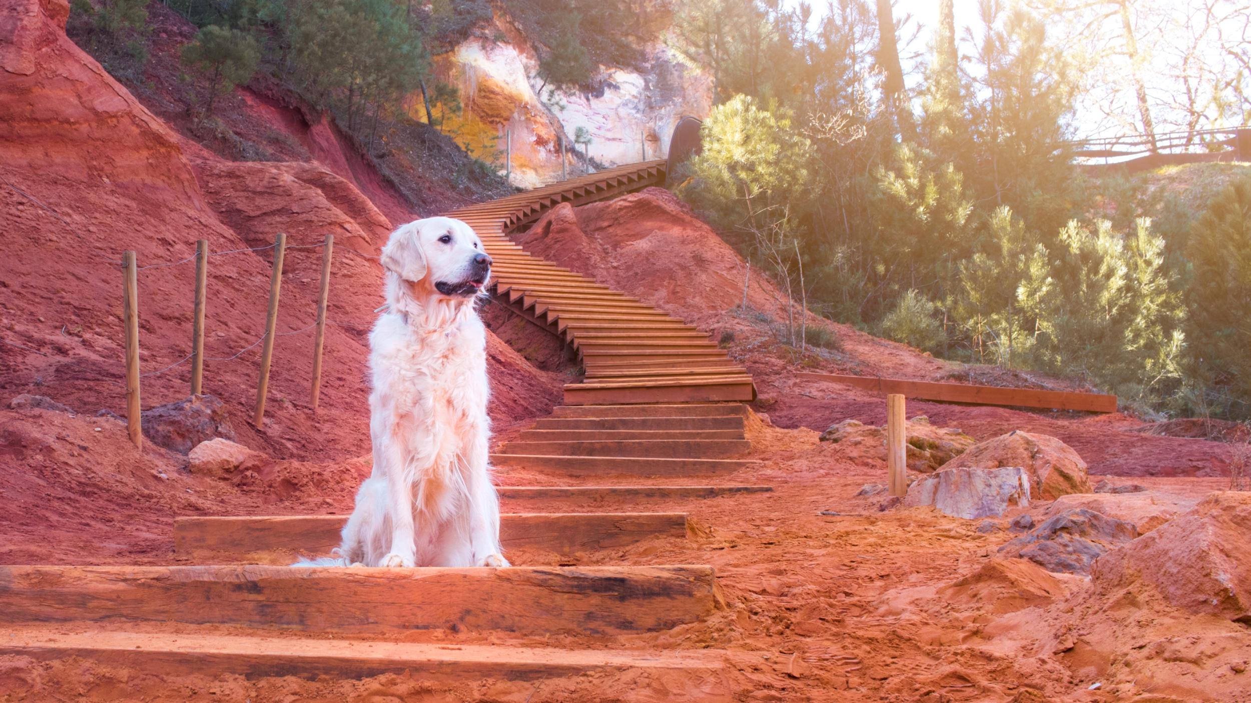 Le sentier des Ocres avec son chien