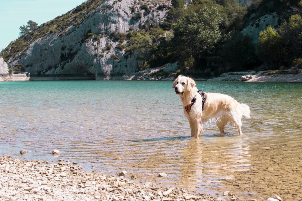Le lac de peiroou en randonnée avec son chien