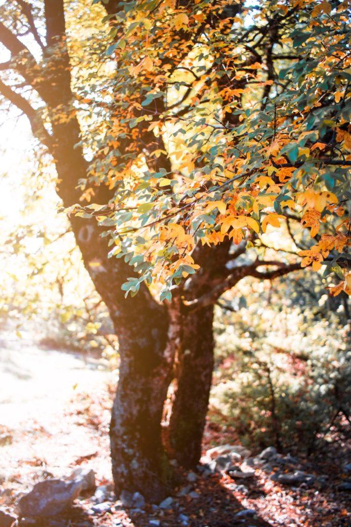 Forêt de Bédoin