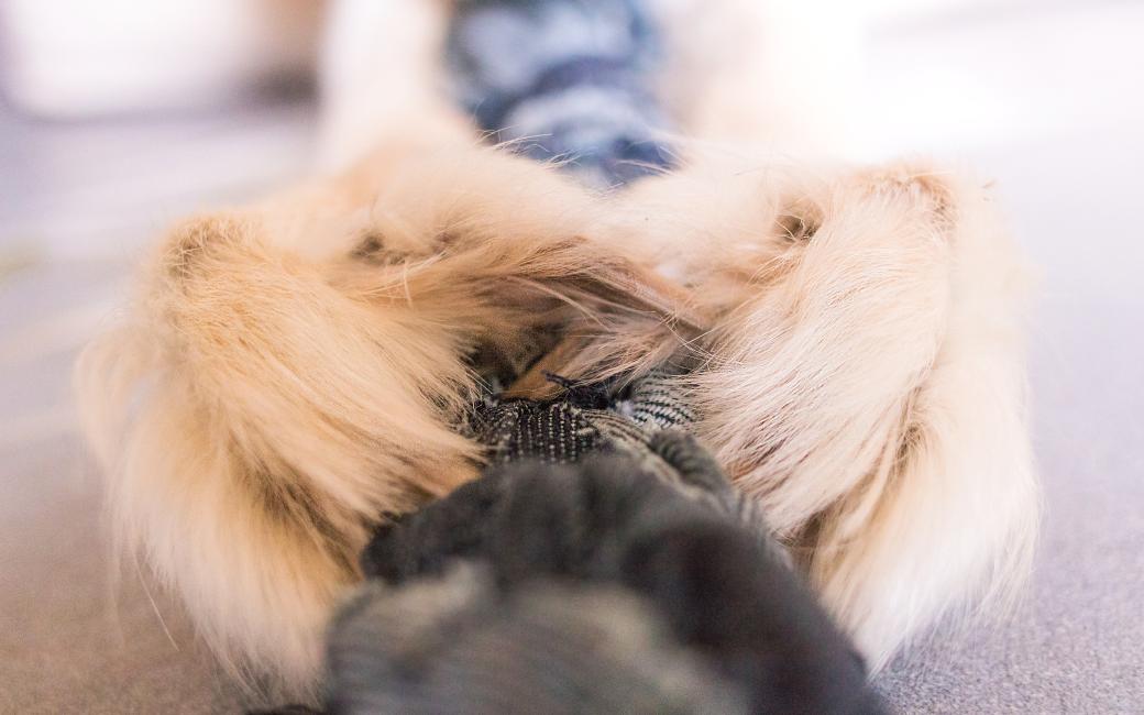 Diy Tug en jeans chien
