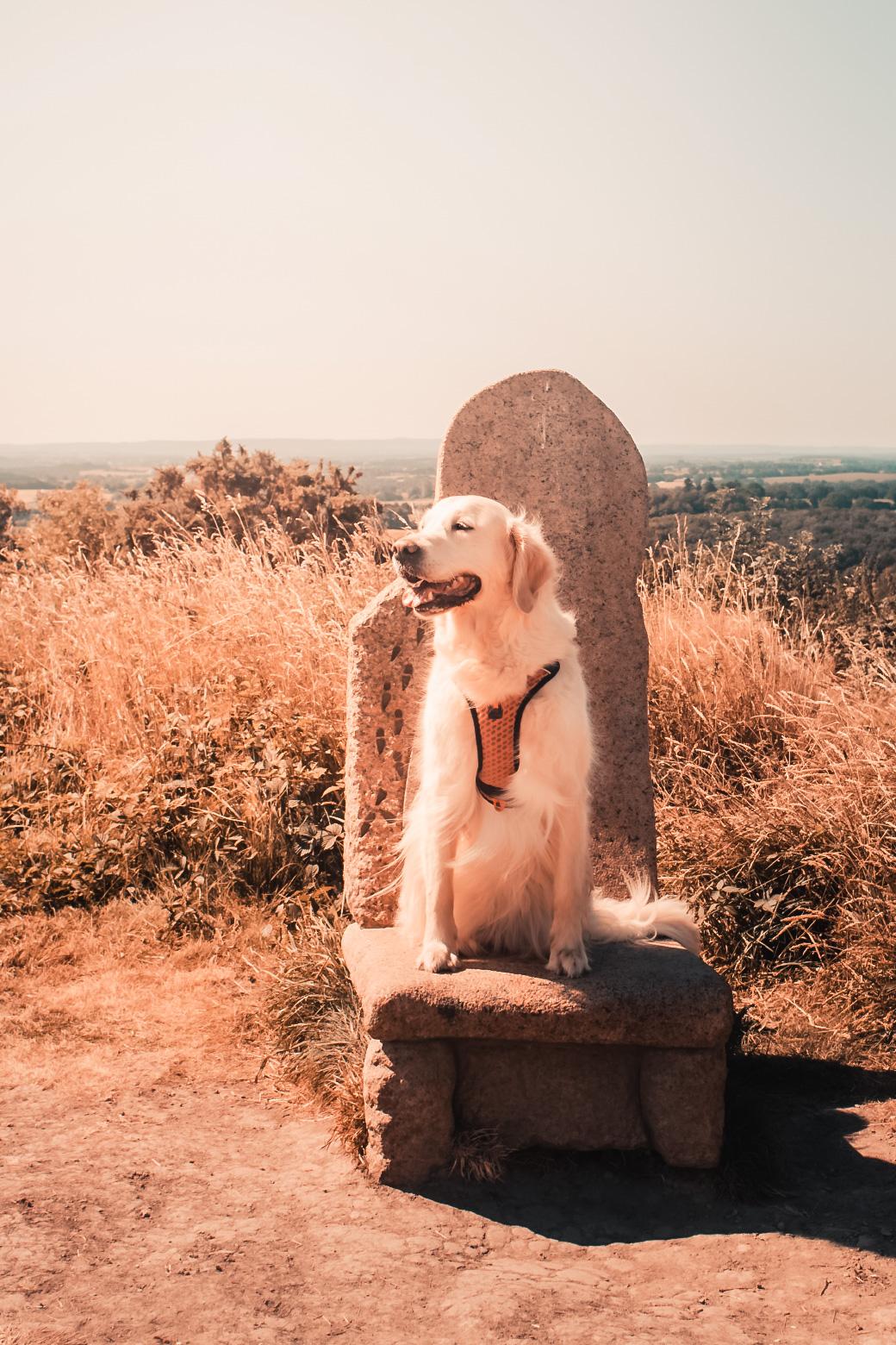 La Vallée des Saints son chien